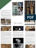 IVC+R. Restos paleontológicos Morella