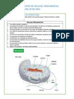 GUÍA 4 TIPOS DE CÉLULAS- CÉLULAS PROCARIOTAS (1)