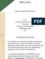 Trabajo Miologia - (m. Anatimia) Veterinaria