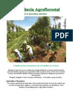 abundancia-agroflorestral-guia-de-agricultura-sintropica