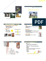Aula Anatomia e Ciclo Reprodutivo Do Macho (1)