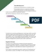 Metodología para el desarrollo del proyecto - cascada - copia