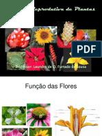 Biologia Reprodutiva das Plantas
