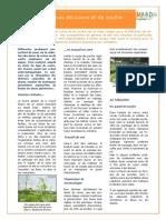 4-Fiche-MABD-biodynamie-viti_Cuivre1