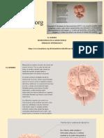 Brain Facts Org