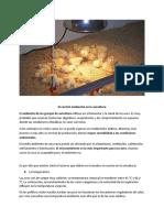 Blog Granja - El Control Ambiental en La Avicultura