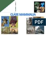 Clase Mammalia Evolucion