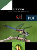Insectos ARTES