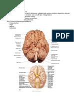 Cranial_Nerves_Handouts