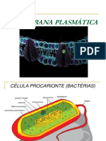 Aula+11+-+Membrana+Plasmática