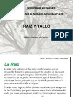 RAIZ Y Tallo_