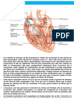 S2CHP2Physiologie cardio-vasculaire 41-80