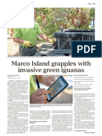 Marco Island Grapples With Invasive Green Iguanas as They Impact Structures Wildlife - Marco Eagle 20210420_A08
