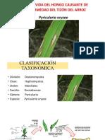 Pyricularia oryzae