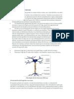 Fisiología de la Neurona