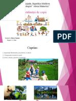 PowerPoint_Natura_Marcu Veronica.