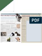 informativo veterinario argos traqueobronquitis ibfecciosa canina