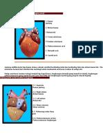 anatomi katak