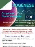 2. oogênese 2020 (1)