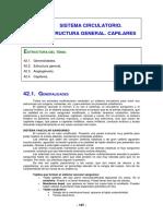 Sistema Circulatorio, estructura general y capilares
