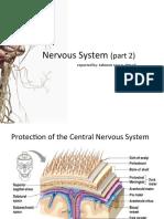nerbyos sistem