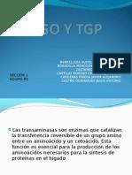 EXPO TGO Y TGP