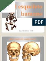 2B_ciencias_esqueleto