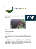 CASO CLINICO DE PROLAPSO RECTAL EQUINO