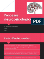 1 ppt De Neuro Anatomía