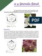 Diagrama y fórmula floral
