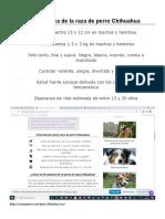 Ficha Técnica de La Raza de Perro Chihuahua