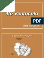 4to Ventrículo