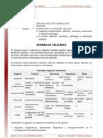 02.-Organelos_nucleo_lectura