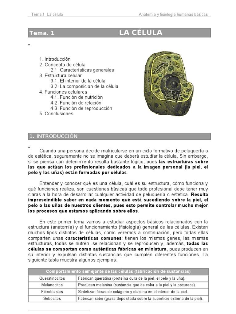 Perfecto Cuál Es La Mejor Manera De Estudiar La Anatomía Y ...