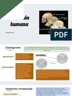 Evolución humana 02