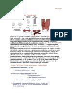 10 - HEMOGLOBINOPATIAS (2)