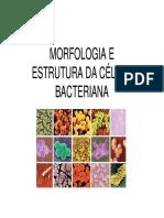 Morfologia e Estrutura Da Celula Bacteriana Aula II