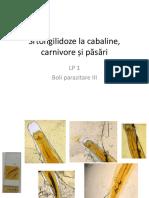 LP 1_Strongilidozele cabalinelor,  carnivorelor si pasarilor
