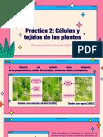 Practica 2 Celular y tedjios de plantas
