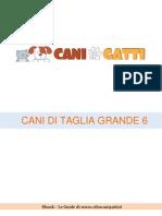 Taglia Grande 6