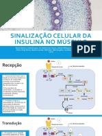 Sinalização celular da insulina no músculo