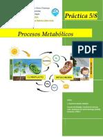 BIO-018 Practica 5 y 8 - Procesos Metabólicos (3)