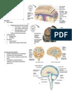 Handouts - Nervous System and Brain Parts 4 - 5