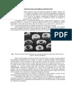 FIZIOPATOLOGIA echilibrului eritrocitar