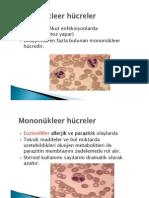 İmmünogenetik 2