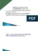 İmmünogenetik 3