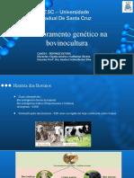 Melhoramento Genético Na Bovinocultura