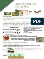2 - La reproduction des végétaux-1_9