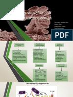 bac Escherichia coli (1)