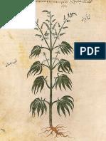 Maconha uso medicinal e descriminalizado